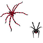 Spinnen Designs Personalisierte Spinnen Design...