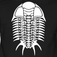 Trilobit skelett