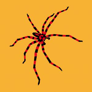 Spinnen T-Shirt zu gestalten. Webspinnen Designs für T-Shirt Druck.
